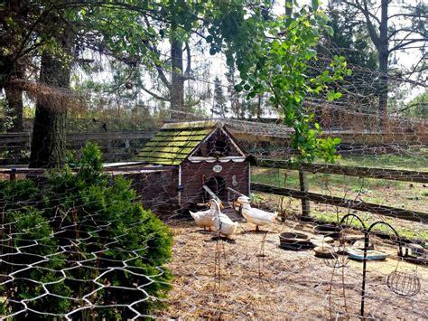 duck house ideas hgtv