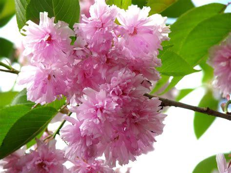 ci fiori aprile 2012 oltre il cancello