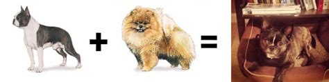pomeranian boxer mix puppies 26 mutt math equations barkpost