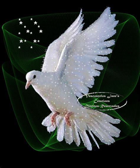 winged gifts of grace some birds spirited musings for s journey books white dove holy spirit holy spirit white dove photo
