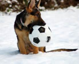 soccer for dogs remembering my snow kari neumeyer rhymes with safari