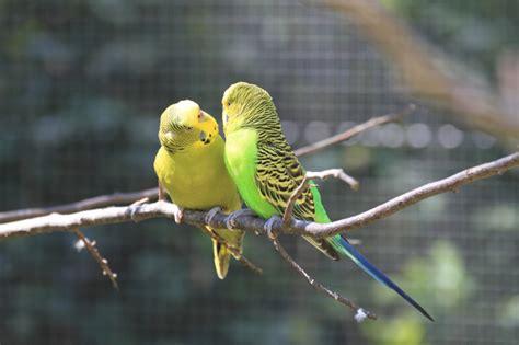 Zoologischer Garten Hof öffnungszeiten by Zoologischer Garten Hof 187 Th 252 Ringen 2017 18