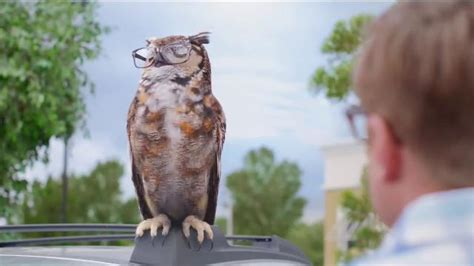 american eyeglasses owl commercial actress in americas best owl commercial