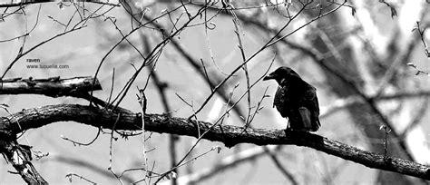 imagenes artisticas en blanco y negro fotografias blanco y negro artisticas imagui