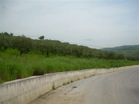 houses to buy in italy property to buy in italy land in guardialfiera