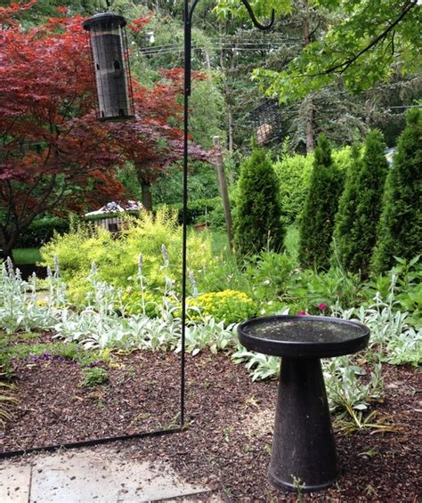 Bird Feeder Garden Garden Dilemma The Bird Feeders Garden Rant