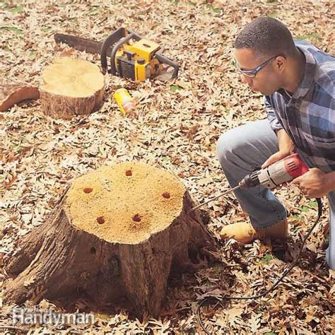 how to remove a tree stump painlessly the family handyman