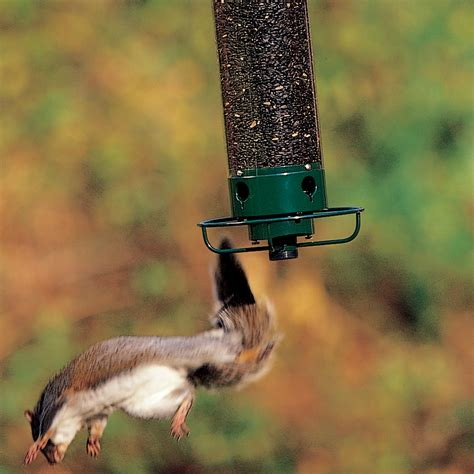 droll yankees flipper bird feeder shelmerdine garden center
