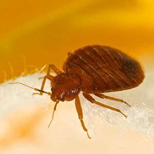 Bed Bugs Or Skin Rash