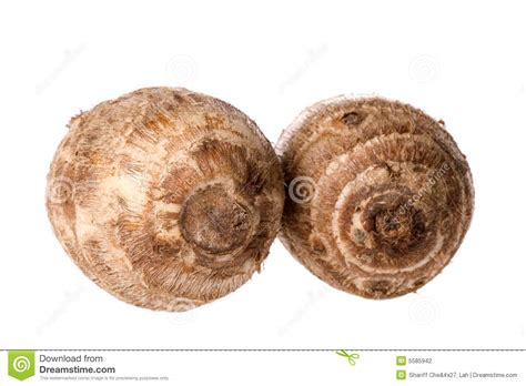 is yam a root vegetable small yam macro stock photography image 5585942