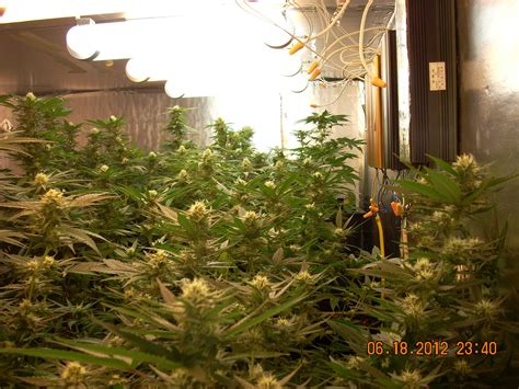 Magnetic Induction Grow Lights & Plasma Grow Lights: Do they work? Grow Weed Easy