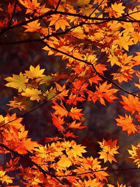 japan autumn ipad mini wallpaper
