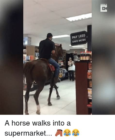 a horse walks into 25 best about horse horse