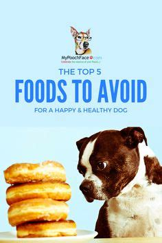 shih tzu food to avoid 1000 images about horses puppies and birds oh my on horses pug and