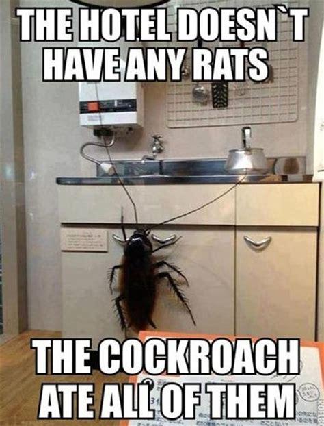 roach meme cockroach meme