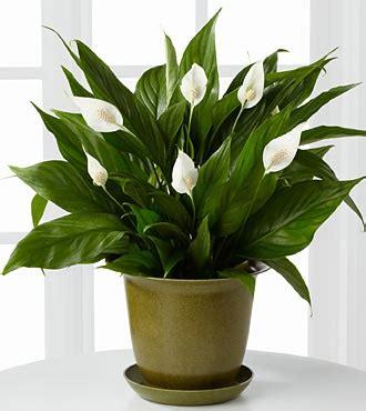 plants   improve indoor air quality eb carpet