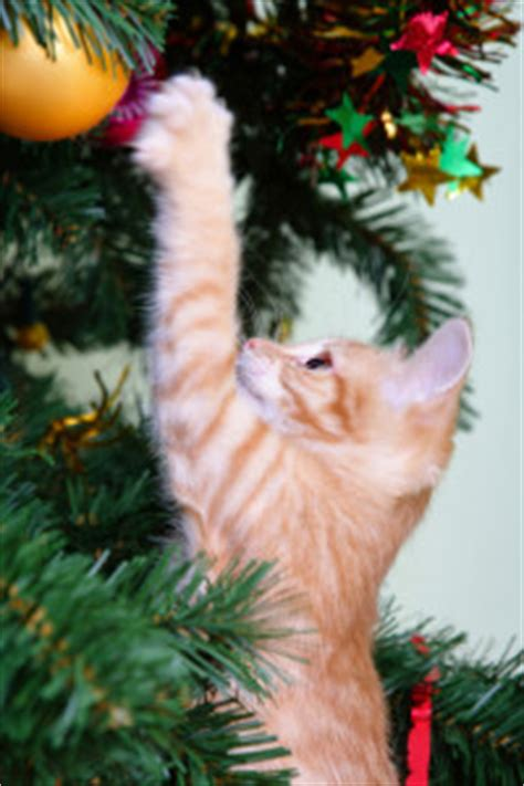 protect christmas tree from cat how to keep out of the tree cats international