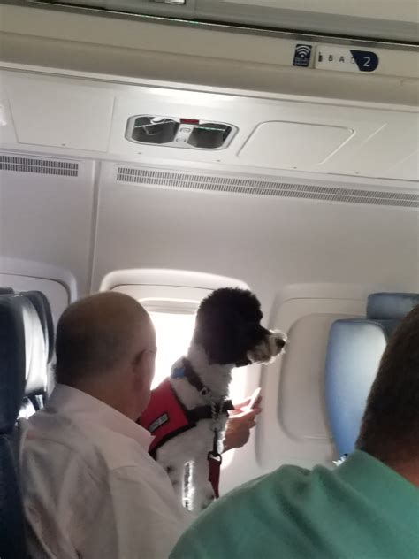 Delta Airlines Pets In Cabin by Delta Waiving Pet In Cabin Fees For The Hurricane While Passengers Waive These Fees Every Day