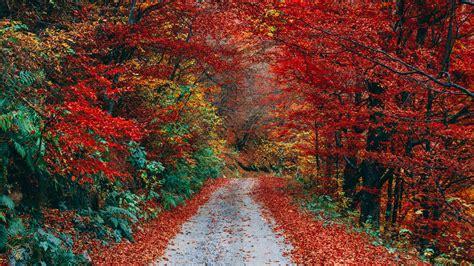 autumn season trees colorful foliage wallpaper wallpaper