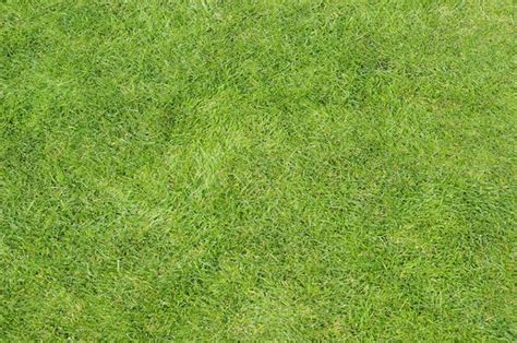grass background pattern free free stock photos rgbstock free stock images grass