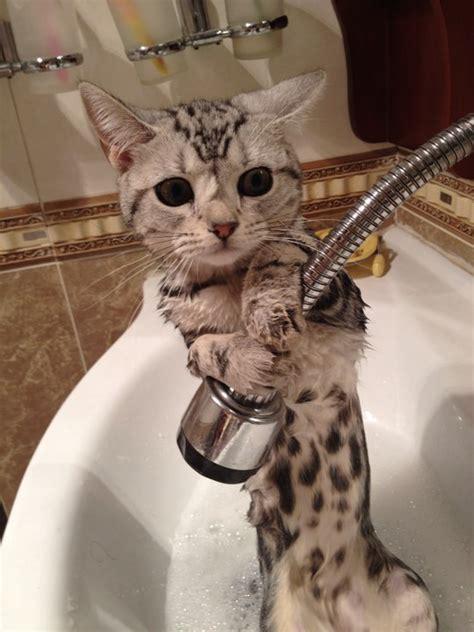 imgur bathroom bath time has commenced imgur