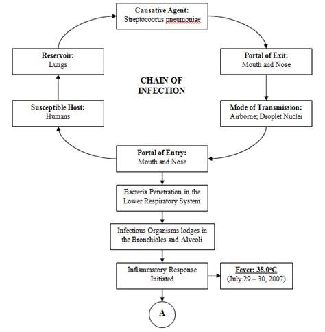 pathophysiology of pneumonia diagram acute respiratory failure study noted files