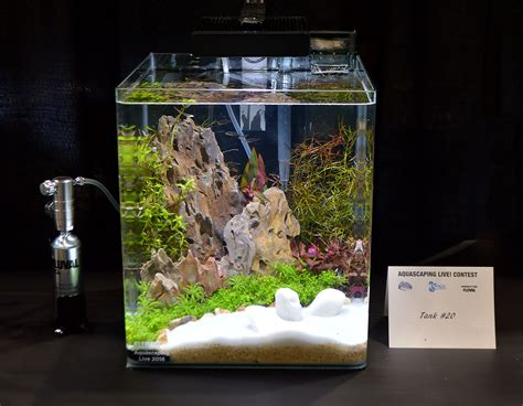 small aquarium aquascape aquascaping live 2016 small planted tanks