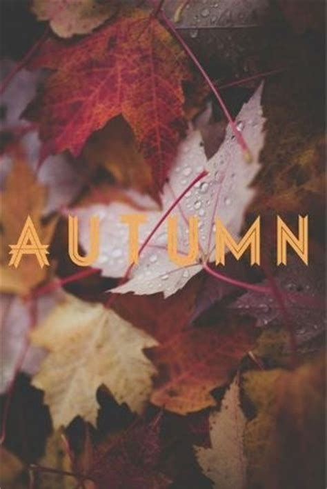 tumblr themes free autumn autumn leaves pictures photos and images for facebook