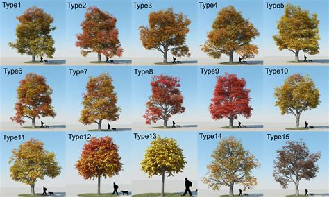 types of maple tree leaves 53479 dfiles maple trees
