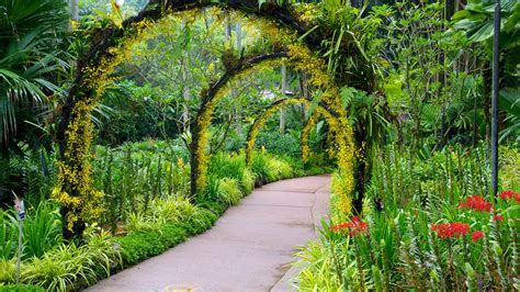 Botanical Gardens Singapore Flowers Pictures View Images Of Singapore Botanic Gardens