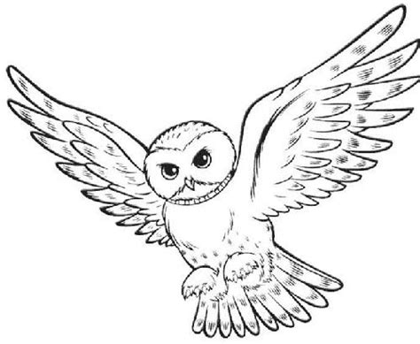 harry potter coloring pages owl 17 best images about harry potter on coloring