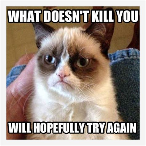 Grumpy Cat Memes Clean - grumpy cat memes what doesn t kill you picsmine