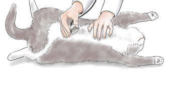 uringeruch aus teppich entfernen den geruch katzenurin entfernen wikihow