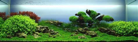 gallery simple aquascape