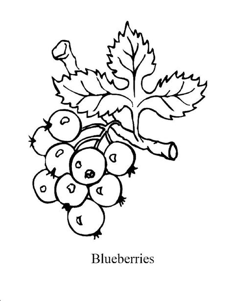 what color are blueberries 20 blueberry coloring pages to print for coloring