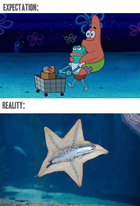 Starfish Meme - aquarium meme photo gallery aquanerd