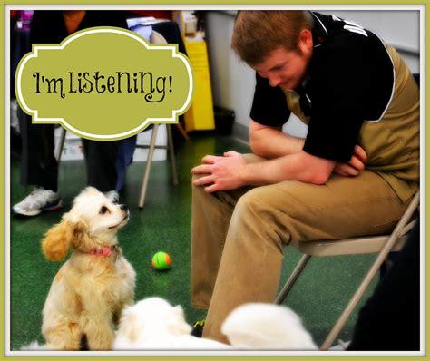 puppies at petco puppy play time at petco talks carolina