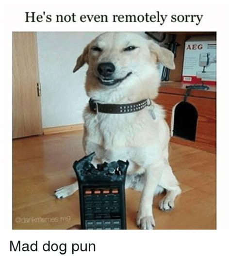 puppy puns 25 best memes about puns puns memes