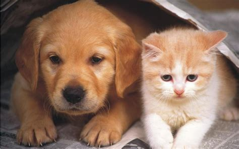puppy and cat and cat wallpaper teddybear64 wallpaper 16834863