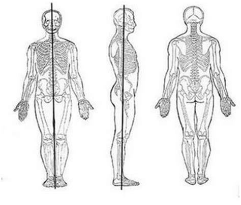 anatoma para posturas de definici 243 n de posici 243 n anat 243 mica 187 concepto en definici 243 n abc