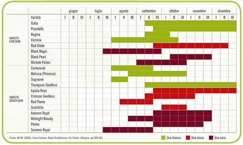 calendario da tavola il mercato dell uva da tavola italiana viviana l uva