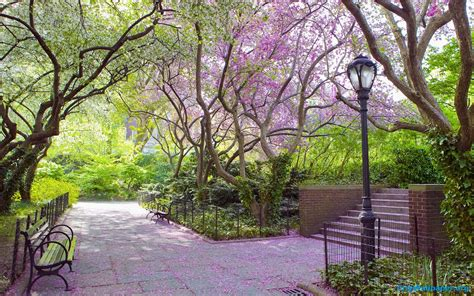 free park central park wallpapers wallpaper cave