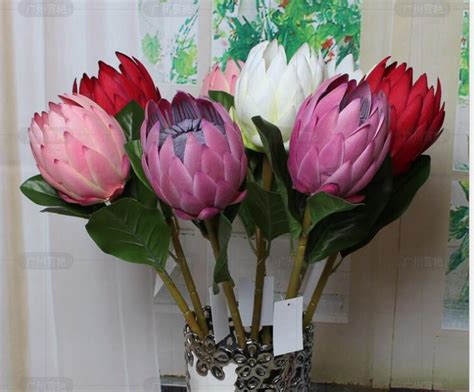 protea fiore popular protea flower buy cheap protea flower lots from