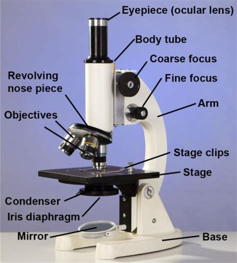 what is a compound light microscope sop use and care of the compound light microscope assist