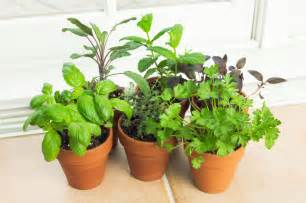 How To Grow Herbs Indoors by Herb Garden Kits A Solution To The Winter Blues