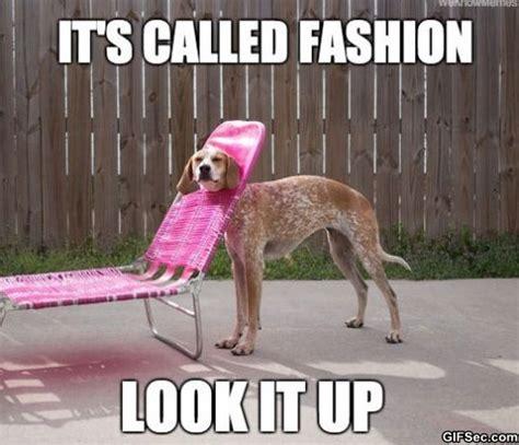 Fashion Meme - funny pictures 2014 fashion dog jpg