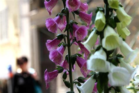 torino fiori via carlo alberto fiori to il verde in citt 224
