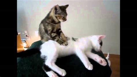 cat massaging cat
