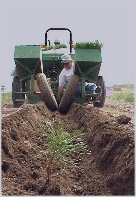 Tree Planters by Conservation Tree Program Cpnrd
