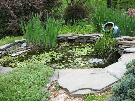 How To Make Pond In Backyard by How To Use Plants For Backyard Ponds To Desire Easy